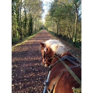appollon-our-shetland-pony-on-the-local-paths